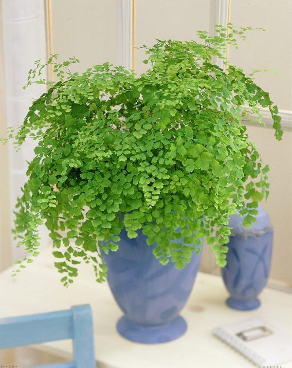 Cozy house plants decoration ideas for indoor 40