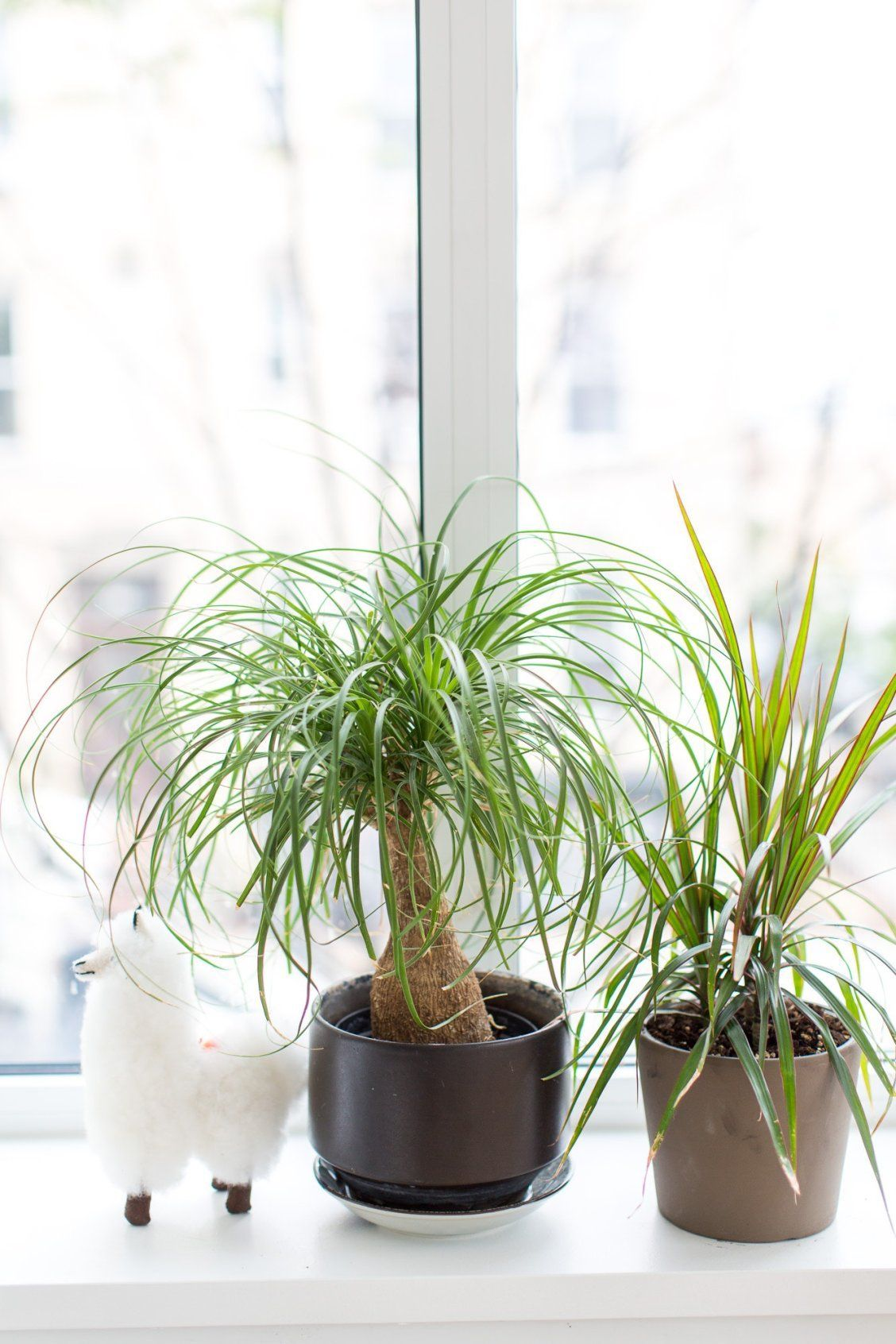 Cozy house plants decoration ideas for indoor 45