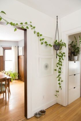 Cozy house plants decoration ideas for indoor 47