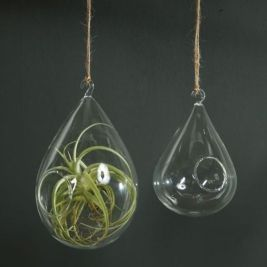 Popular air plant display ideas for home 01