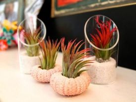 Popular air plant display ideas for home 07