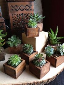 Popular air plant display ideas for home 13