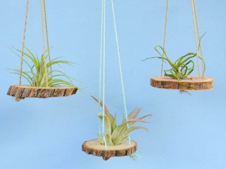 Popular air plant display ideas for home 15