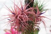 Popular air plant display ideas for home 25