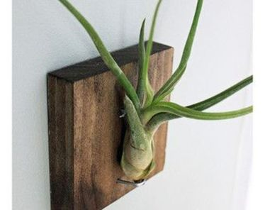 Popular air plant display ideas for home 28