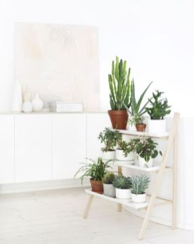 Popular air plant display ideas for home 30