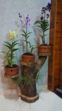 Popular air plant display ideas for home 34