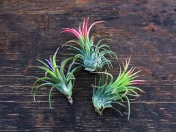Popular air plant display ideas for home 42