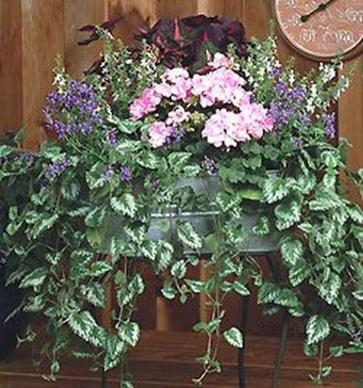 Attractive window box planter ideas to beautify up your home 24