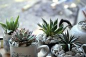 Impressive mini garden mug ideas to add beauty on your home 08