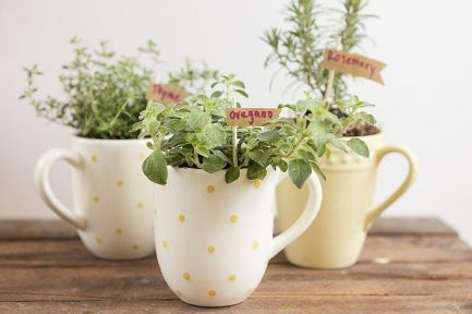 Impressive mini garden mug ideas to add beauty on your home 16