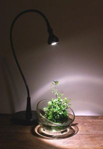 Impressive mini garden mug ideas to add beauty on your home 19