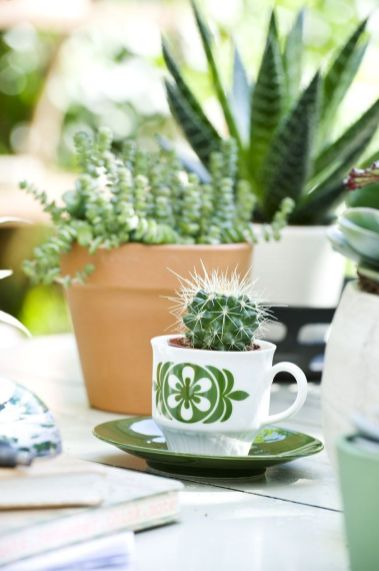 Impressive mini garden mug ideas to add beauty on your home 22