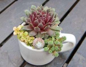 Impressive mini garden mug ideas to add beauty on your home 42