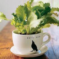 Impressive mini garden mug ideas to add beauty on your home 47
