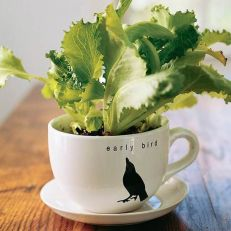 Impressive mini garden mug ideas to add beauty on your home 47