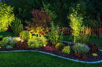 Illuminated,garden,by,led,lighting.,backyard,garden,at,night,closeup