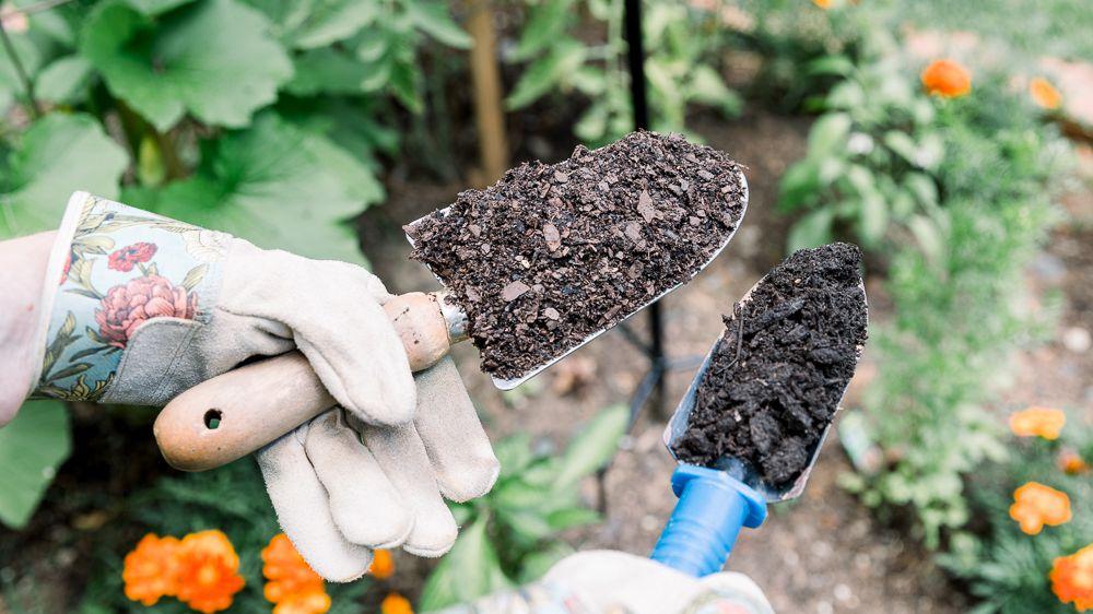 Starter Gardening Supplies: A Beginner Guide to Garden Decor