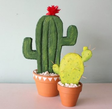 Cactus-plants-for-your-room-decor-705x549