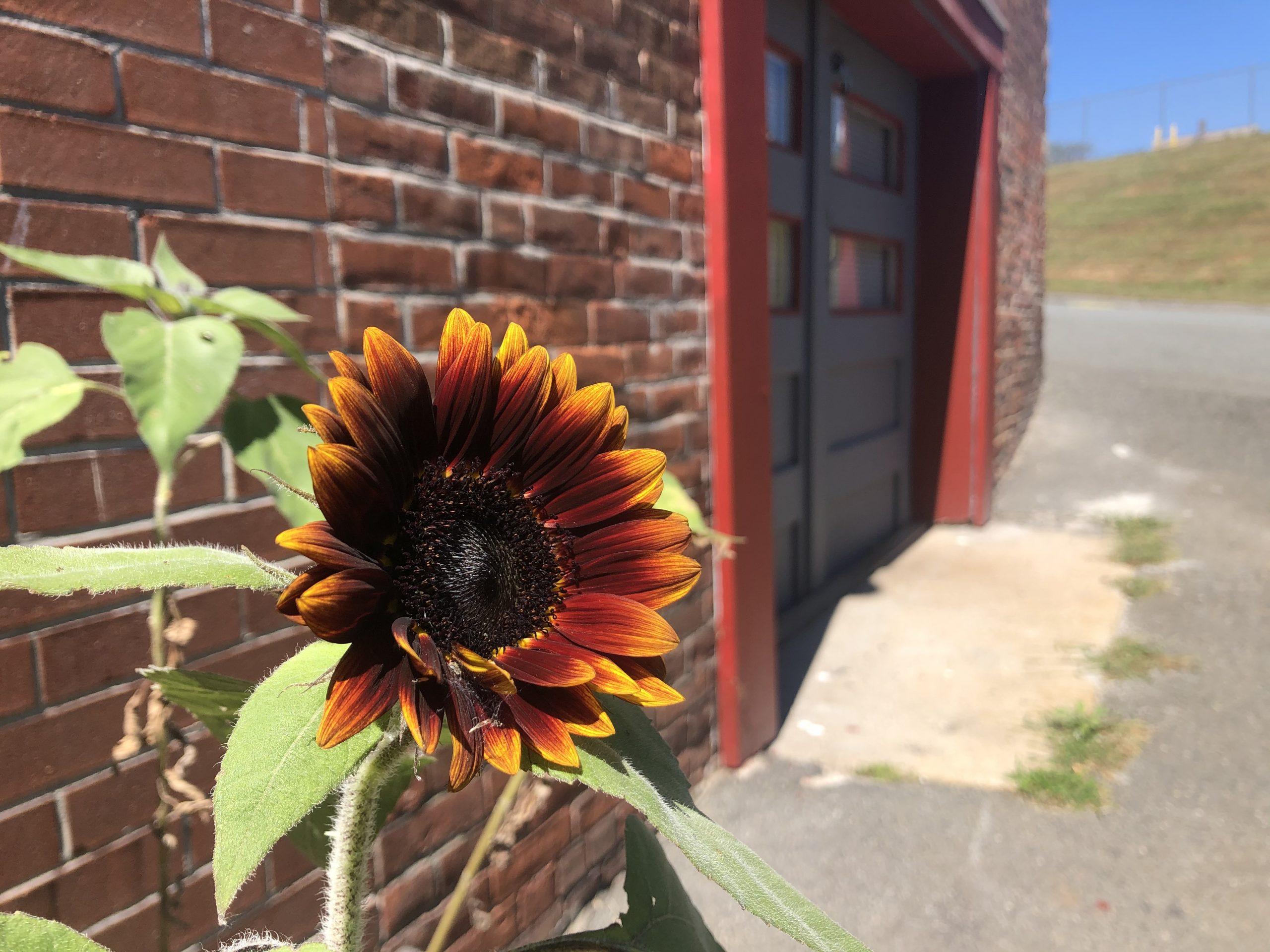 Blacksmith Shop Front Door