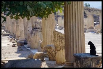 Cat and Pillars