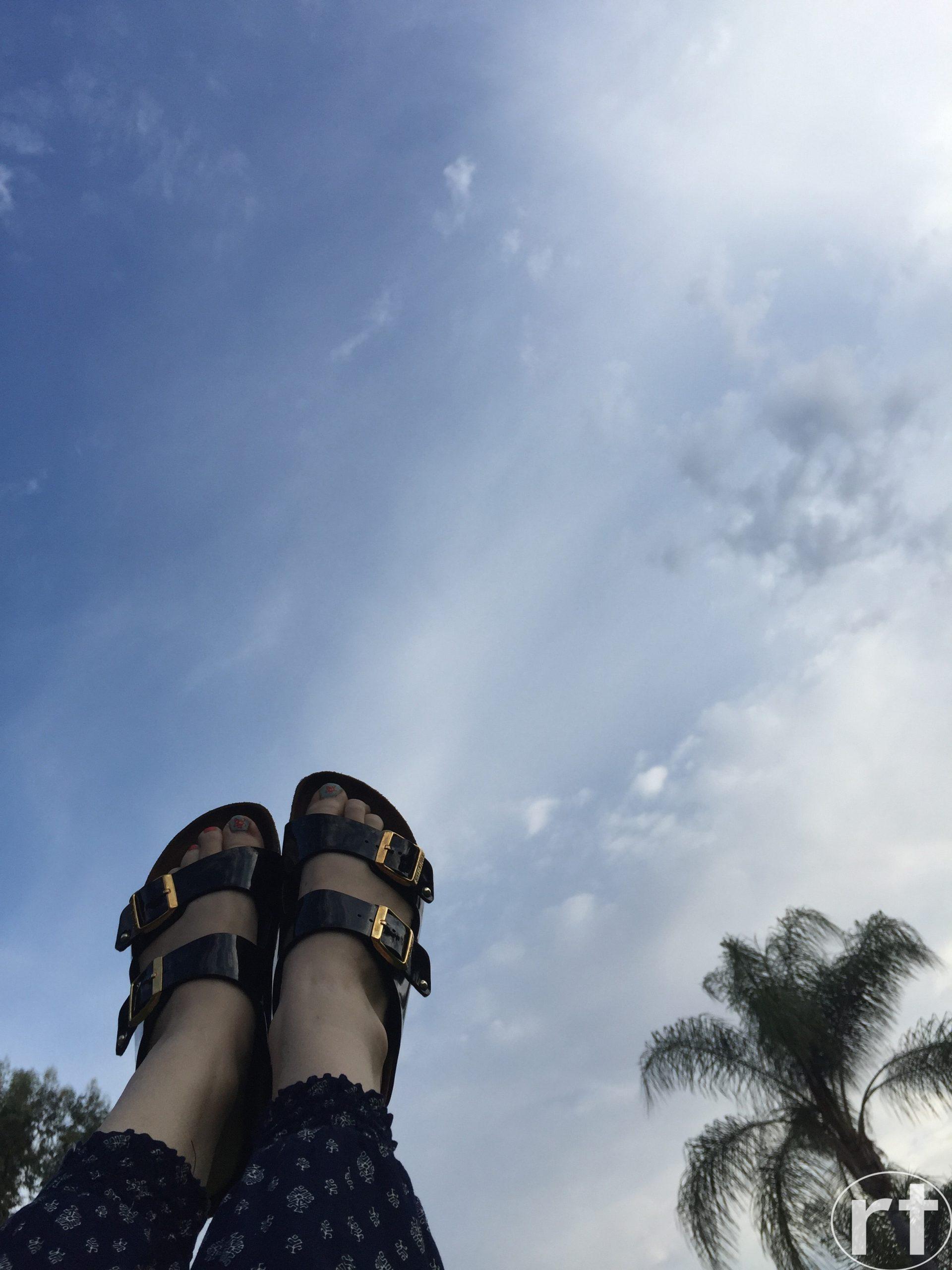 Los Angeles California Palm Trees