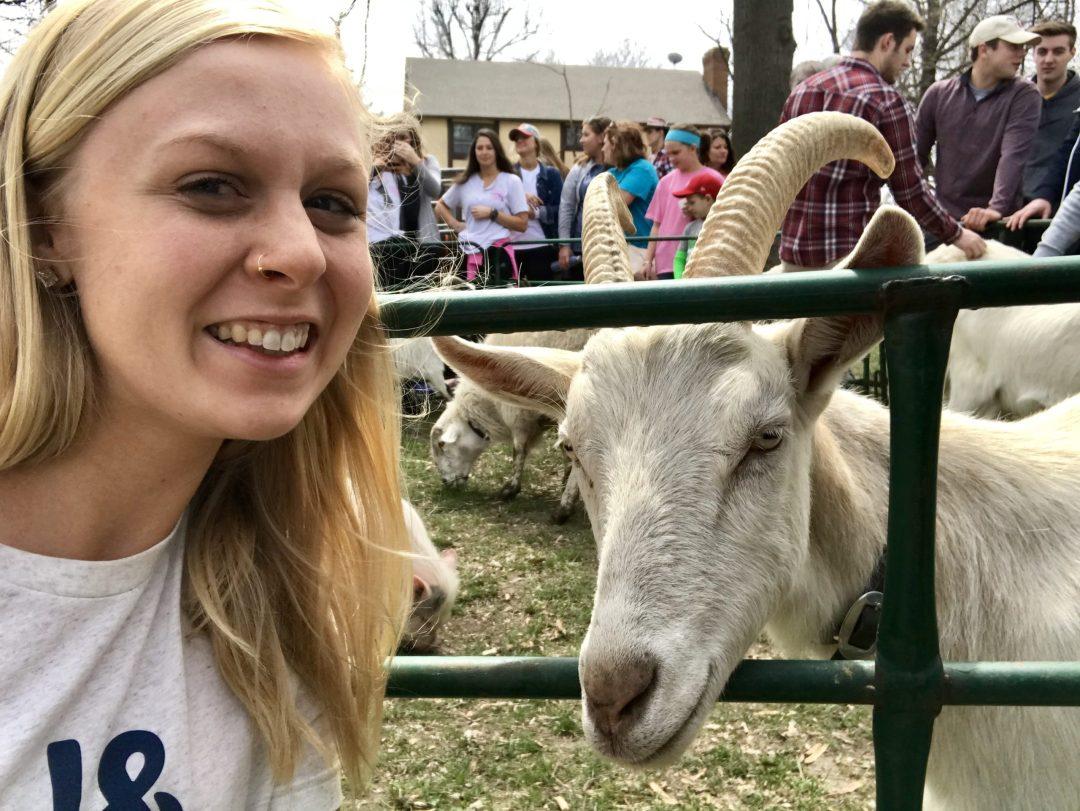 Petting Zoo April Roundup Round Trip