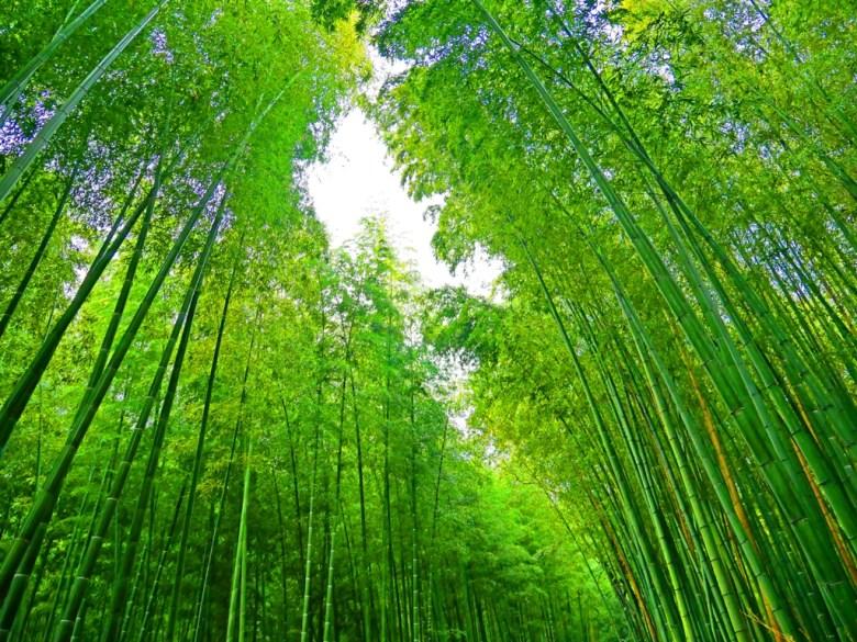 竹林 | 嵐山 | 京都 | 巡日旅行攝