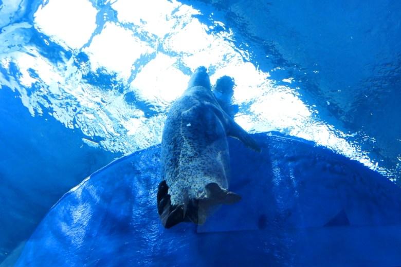 斑海豹 | Spotted seal | Xpark | Zone 5 | Taiwan | RoundtripJp