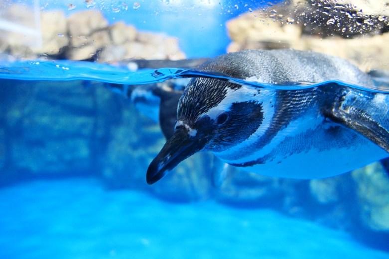 企鵝奇遇 Penguin Life | Xpark | Zone 9 | Taiwan | RoundtripJp