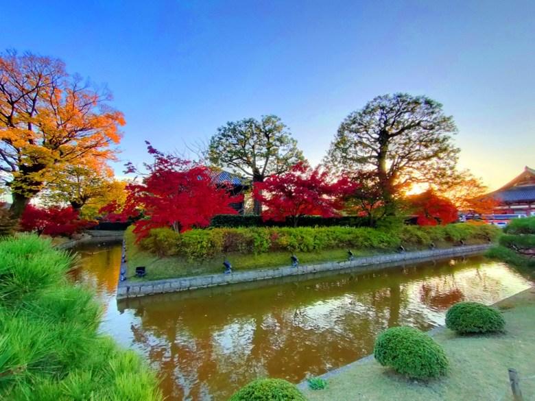 銀杏 | とうじ | 東寺 | 京都 | 近畿(關西) | 日本 | 巡日旅行攝