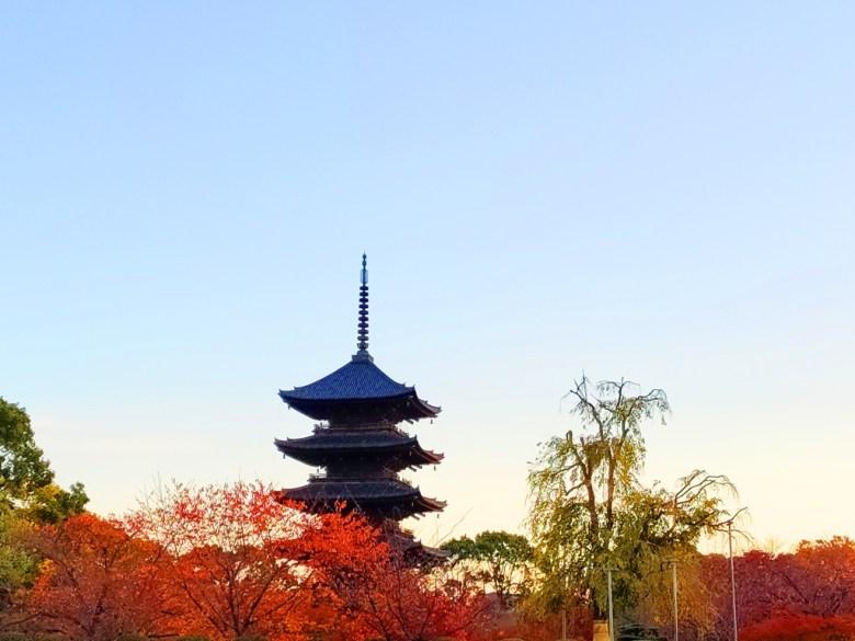 Maple | とうじ | 東寺 | Kyoto | Kansai | Japan | RoundtripJp