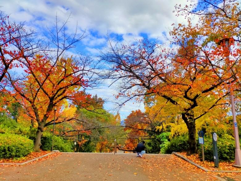 楓葉 | おおさかじょうこうえん | 大阪城公園 | 大阪 | 近畿(關西) | 日本 | 巡日旅行攝
