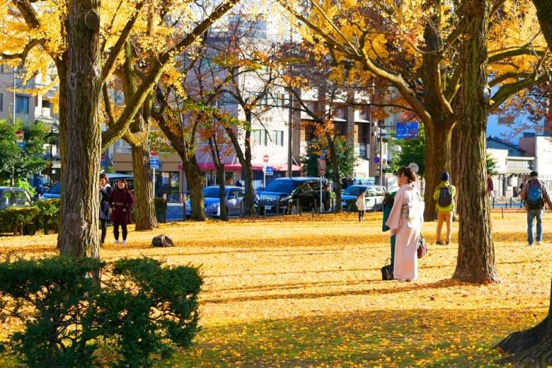 銀杏 | 蓮華の噴水 | 蓮華的噴水池兩旁 | 京都 | 近畿(關西) | 日本 | 巡日旅行攝