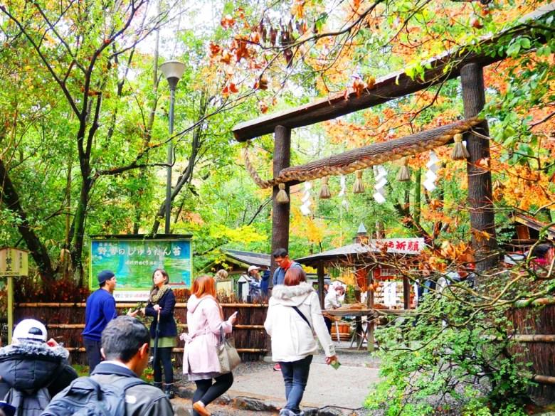 楓葉 | ののみやじんじゃ | 野宮神社 | 嵯峨野 | 京都 | 近畿(關西) | 日本 | 巡日旅行攝
