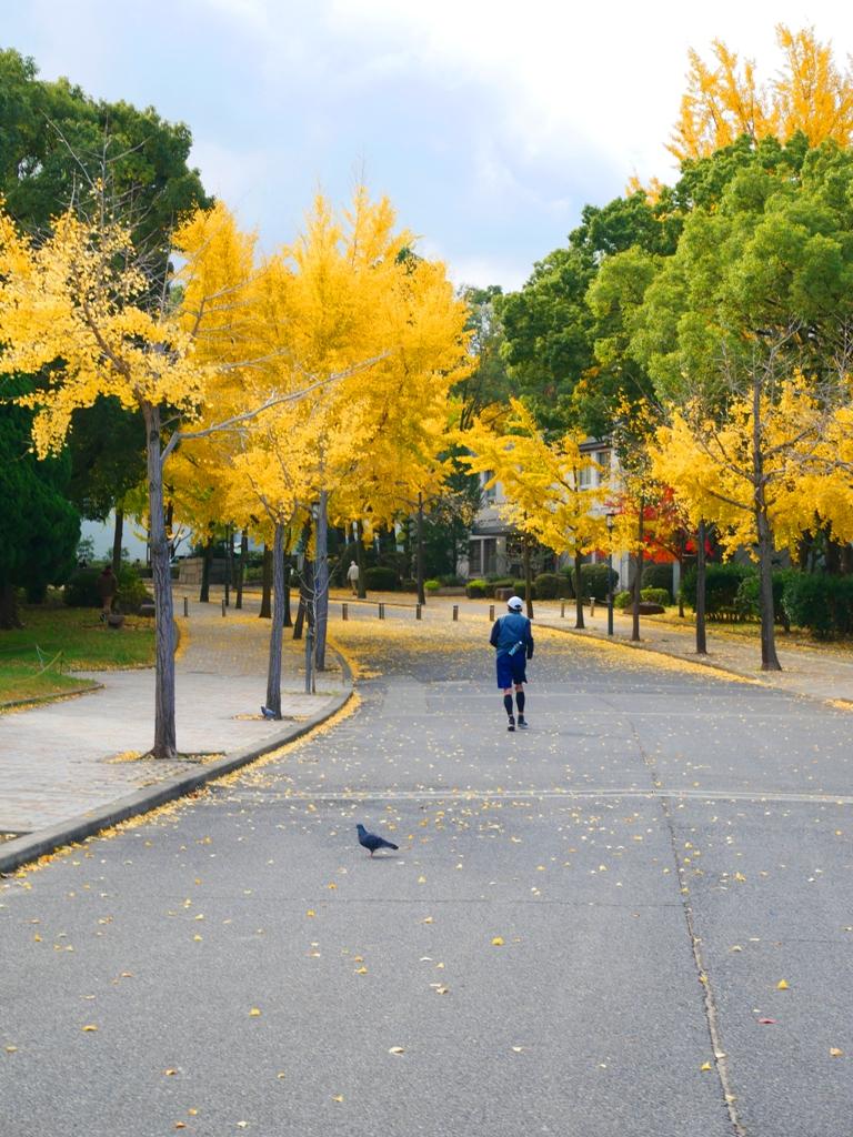 Ginkgo Biloba | おおさかじょうこうえん | 大阪城公園 | Osaka | Kansai | Japan | RoundtripJp