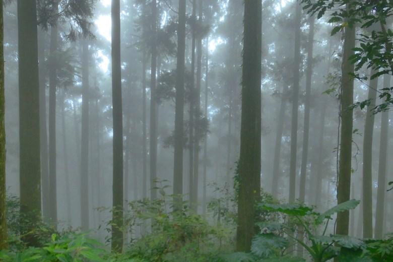 樹海秘境 | 海拔1405公尺 | 奮起湖 | 嘉義 | 臺灣 | 巡日旅行攝