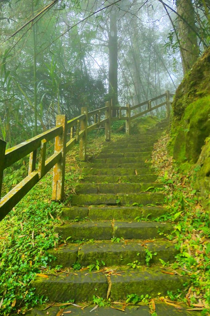 往奮起湖神社遺跡 | 奮起步道 | Fenqi Trail | 阿里山公路中和支線/169縣道旁 | 嘉義 | 臺灣 | 巡日旅行攝