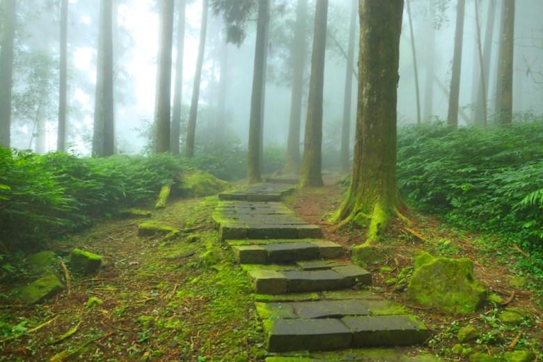 往左鹿鼎巨木方向 | 雲霧繚繞奮起湖步道 | Mt.ali | Chiayi | Taiwan | RoundtripJp