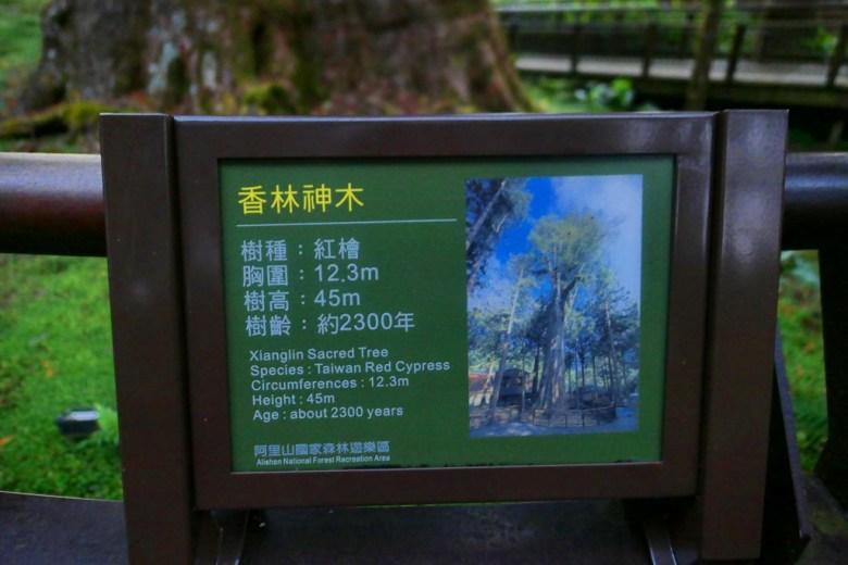 阿里山香林神木 | Xianglin Sacred Tree | 樹齡約2300年 | 阿里山 | 嘉義 | 臺灣 | 巡日旅行攝