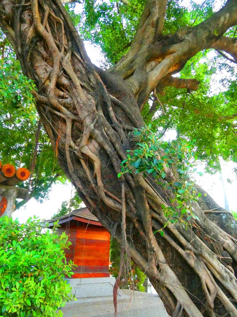 榕樹下的日式神社 | えんすいじんじゃ | 台南市 | Tainan | RoundtripJp
