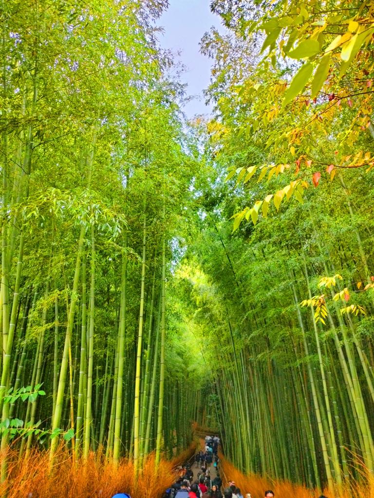 多彩日本 | 京都嵐山竹林小徑 | 日本清新景點 | TOP10 | 巡日旅行攝