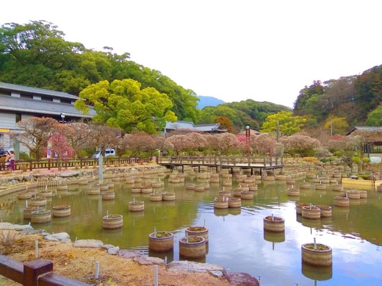 多彩日本 | 福岡太宰府天滿宮 | 日本清新景點 | TOP10 | 巡日旅行攝