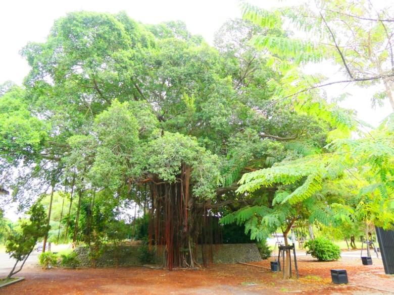 百年老榕 | 隱藏在巨樹下的日本神社 | 蒜頭神社 | SuanTou | Lioujiao | Chiayi | 巡日旅行攝