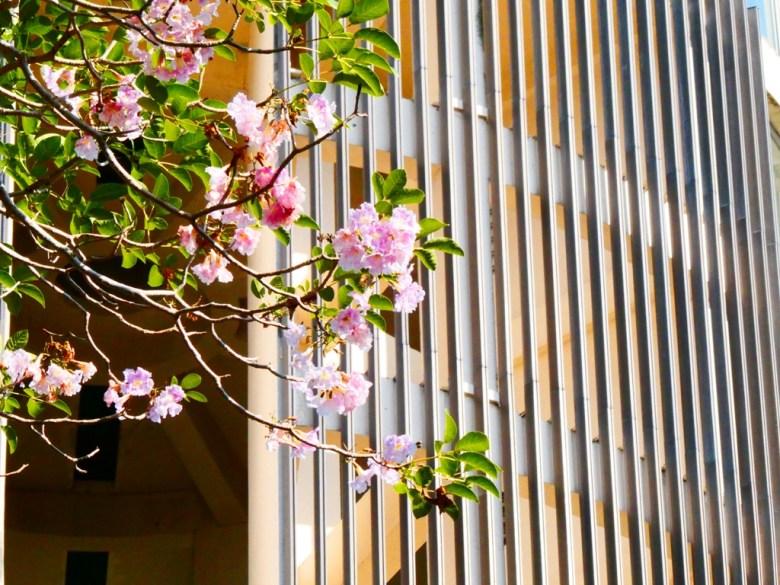 洋紅風鈴木 | 射日塔 | 自然與現代建築之美 | 嘉義神社遺跡 | 嘉義公園 | 一抹和風 | RoundtripJp