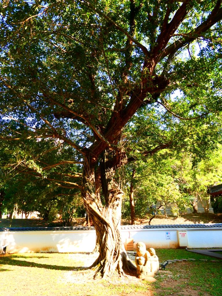 巨樹參天   和風庭院   嘉義市史蹟資料館內   昭和J18內   嘉義   臺灣   巡日旅行攝