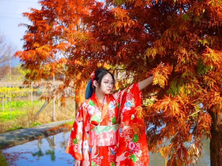 羽毛般的紅葉 | 大紅和服少女 | 網美景點 | Taian | Miaoli | RoundtripJp