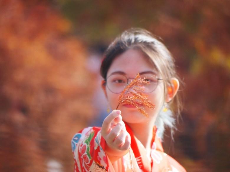 紅葉如羽 | 秋色艷紅 | 日本和服 | 網美景點 | Taian | Miaoli | RoundtripJp