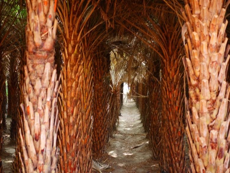 中東海棗 | 黑森林樹海隧道 | 隧道口的一抹曙光 | 大肚落羽松秘境 | 大肚 | 臺中 | RoundtripJp