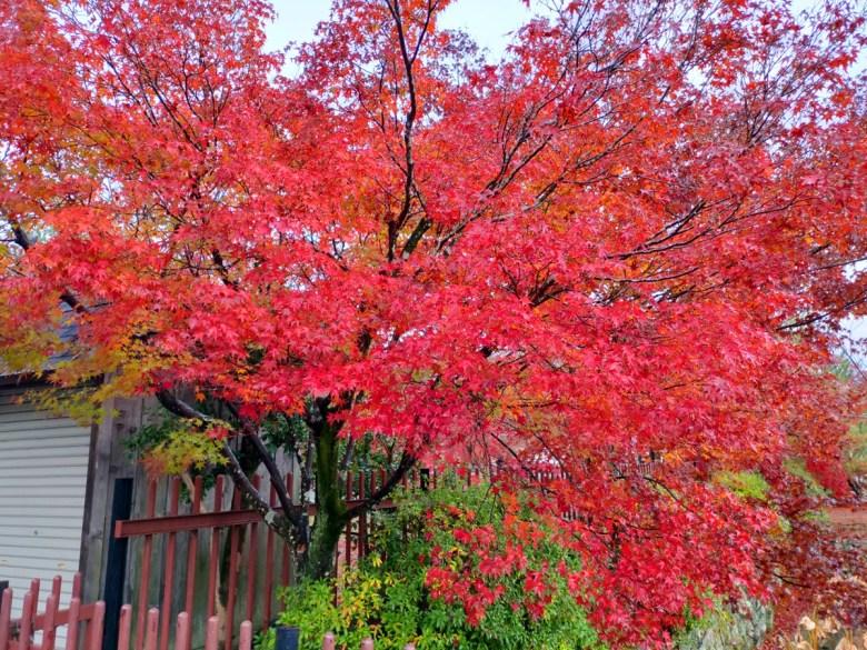 Colorful Japan | 天龍寺楓葉 | 楓葉之國 | 紅葉之國 | 日本的別稱 | RoundtripJp